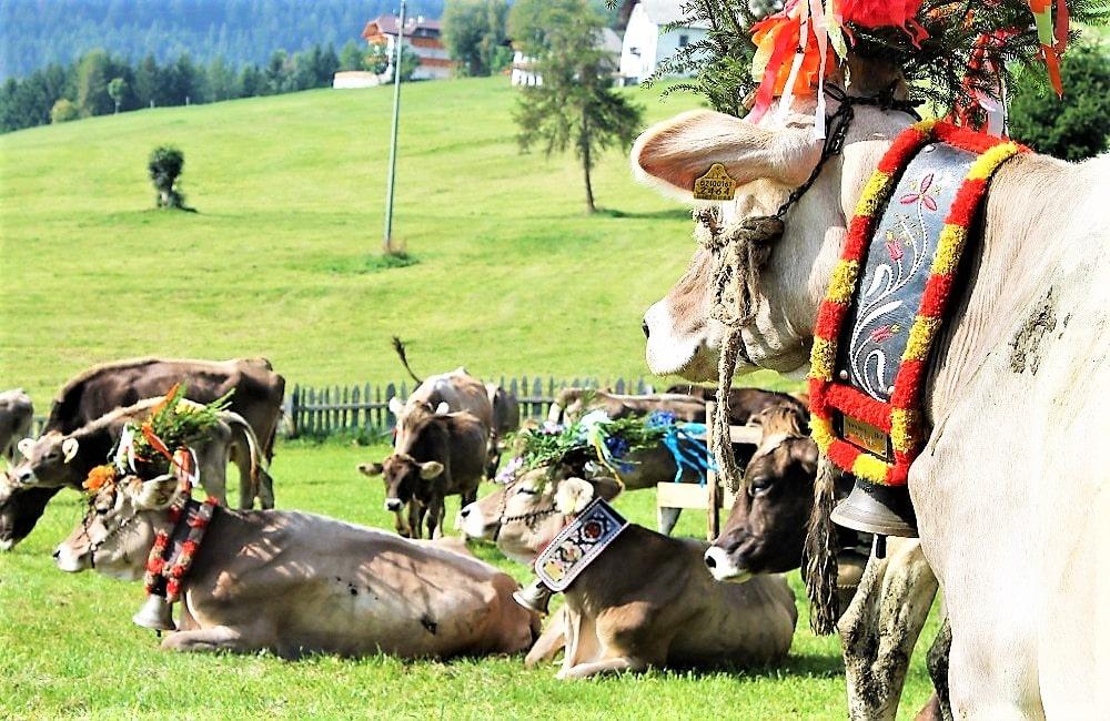 Almabtrieb Meransen - Südtirol - Konzerte - Musikreise