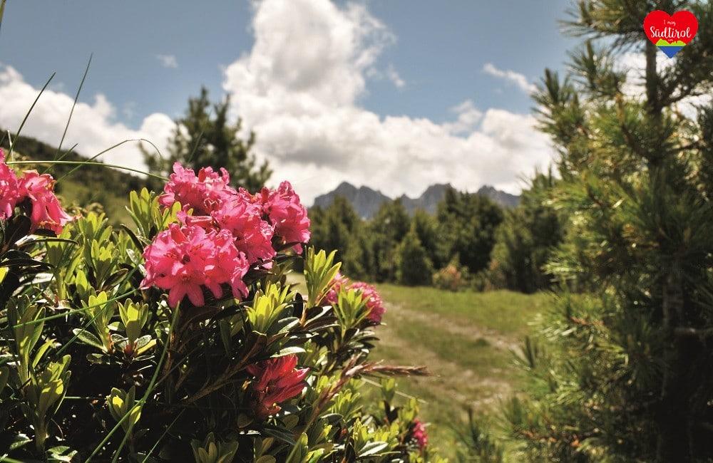 Konzert: Alpenrosenfest mit Vincent & Fernando in Meransen - Südtirol - Musikreise