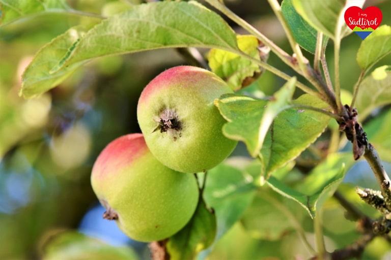 Apfel_apple-3524113_1920