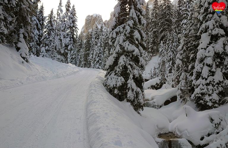 Wintertour zur Gampenalm - herrlicher Winterwald