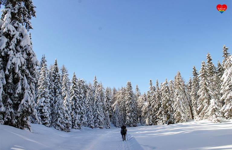 Winterwanderung auf der Rodeneckeralm - herrlicher Winterwald