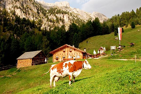 Villnösser Alm Wanderreise Almen Südtirol