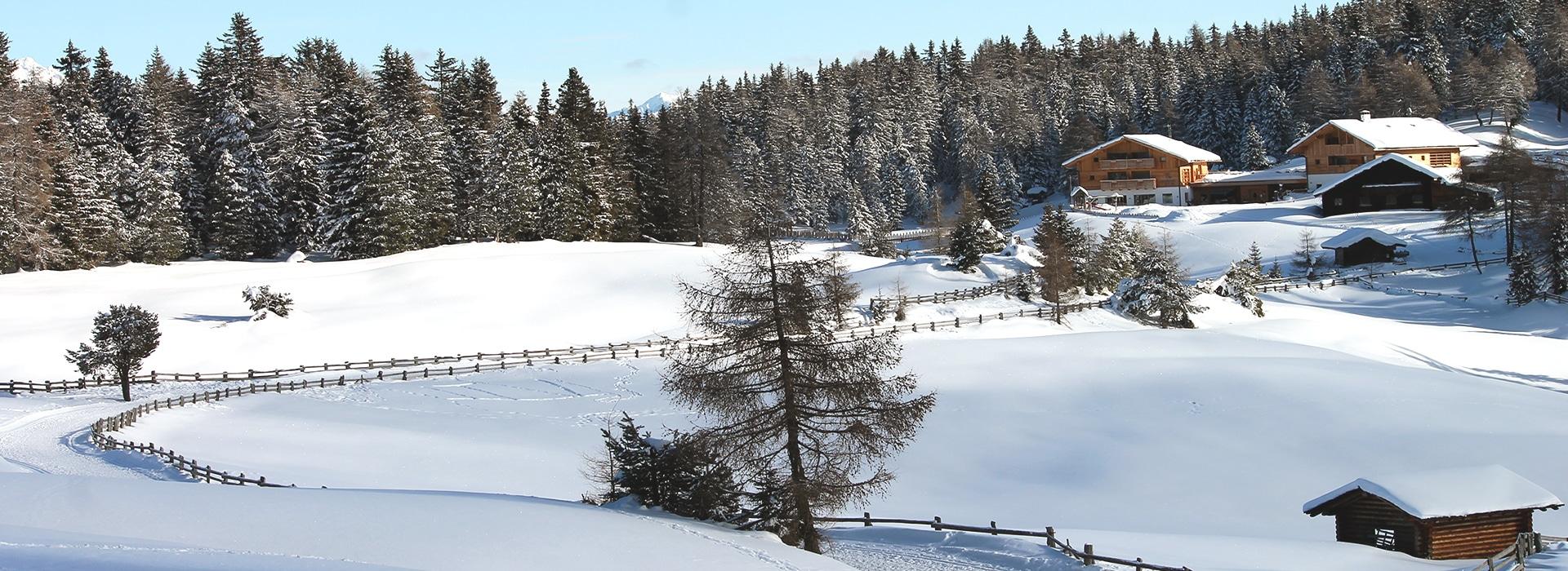 Roneralm – Rodeneckeralm - Rodeneck - Almen in Südtirol – Winterwandern Eisacktal - I mog Südtirol – Wandern in Südtirol